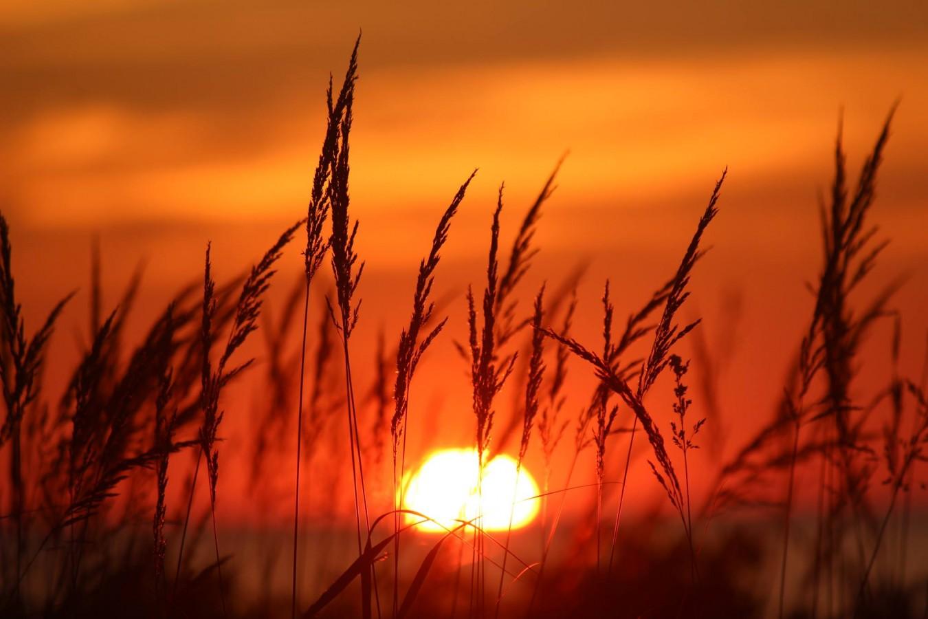 James macLellan_Hayfield through the sunset_Facebook_Aug 2